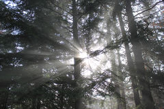 Play of light in the forest Royalty Free Stock Photography