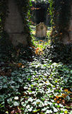 Play of light in jewish cemetery Royalty Free Stock Photo