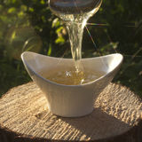 The play of light in stream of honey. Stock Image