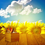 Play music in summer time Royalty Free Stock Images