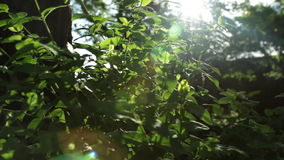 Play of sun through new fresh green leaves. Solar glare in the lens. Beautiful spring nature scene stock footage