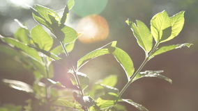 Play of sun through new fresh green leaves. Solar glare in the lens. Beautiful spring nature scene stock video