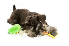 Play time Stock Photography