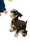Play time. Playful dog with chew toy royalty free stock photo