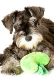 Play time. Playful dog with chew toy royalty free stock image
