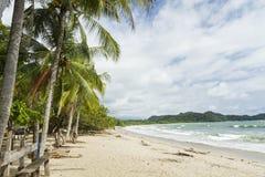 Playa加尔萨棕榈树 库存图片