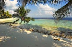 Playa agradable con la palmera Foto de archivo libre de regalías