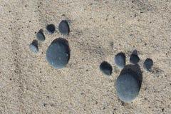 Playa amistosa del animal doméstico Fotos de archivo