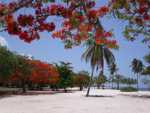 Playa Ancon. Beautiful Playa Ancon.  Trinidad.  Cuba Stock Photography