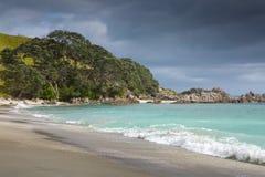 Playa arenosa de la franja de los árboles de Pohutukawa Imágenes de archivo libres de regalías