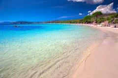 Playa arenosa de Palombaggia con los árboles de pino en la isla de Córcega, Francia, Europa Fotografía de archivo libre de regalías