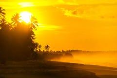 Playa arenosa del verano con las palmeras en puesta del sol Foto de archivo libre de regalías