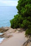 Playa arenosa hermosa con un bosque del pino Fotos de archivo libres de regalías