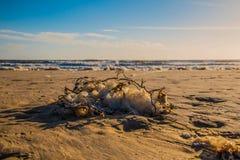 Playa atlántica Fotos de archivo libres de regalías