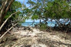 Playa azul rodeada por un bosque Imágenes de archivo libres de regalías