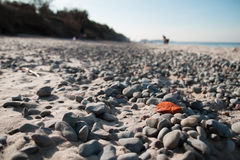 Playa báltica en la primavera Fotografía de archivo libre de regalías