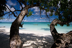 Playa blanca de la arena con los árboles Imagen de archivo libre de regalías