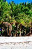 Playa blanca tropical rural de la arena con las palmas de coco Foto de archivo libre de regalías