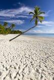 Playa Bonita στη Isla Saona Στοκ Εικόνες
