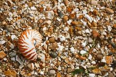 Playa británica del verano con la cáscara del mar del pompilius del nautilus Imágenes de archivo libres de regalías