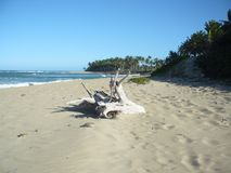 Playa Cangrejo - fri tid Royaltyfria Foton