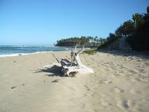 Playa Cangrejo - tempo livre Fotos de Stock Royalty Free