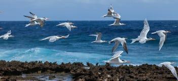 Playa Canoa waves and birds Royalty Free Stock Image