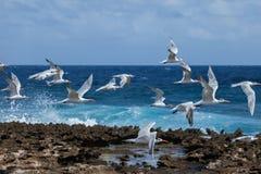 Playa Canoa waves and birds Stock Photography