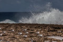 Playa Canoa waves and birds Stock Image