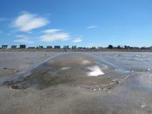 Playa común del francés de las medusas del gigante Foto de archivo