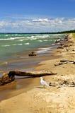 Playa con driftwood Fotos de archivo libres de regalías
