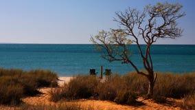 Playa con el árbol Fotos de archivo