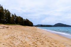 Playa con el bosque del pino Imagen de archivo