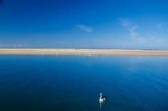 Playa con el pelícano Fotografía de archivo libre de regalías