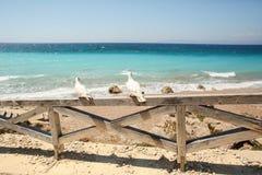 Playa con la cerca y 2 gaviotas Imagen de archivo