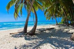 Playa con la palma foto de archivo libre de regalías