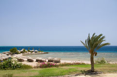 Playa con la palmera Imagenes de archivo