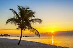 Playa con la palmera en la puesta del sol Foto de archivo libre de regalías