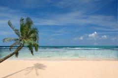 Playa con la palmera solitaria Imagen de archivo libre de regalías