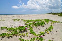 Playa con la vid de ferrocarril Foto de archivo libre de regalías