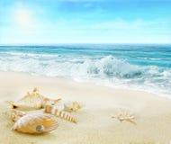 Playa con las cáscaras y la perla imagen de archivo libre de regalías