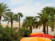Playa con las palmeras. Imágenes de archivo libres de regalías
