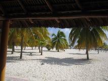 Playa con las palmeras fotografía de archivo libre de regalías