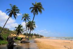 Playa con las palmeras Imagen de archivo libre de regalías