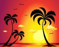 Playa con las palmeras en la puesta del sol Fotografía de archivo libre de regalías