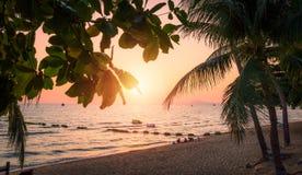Playa con las palmeras en la puesta del sol Playa de Jomtien en Tailandia Foto de archivo