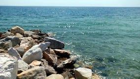 Playa con las rocas y agua cristalina en el área de Nikiti Halkidiki Grecia almacen de video
