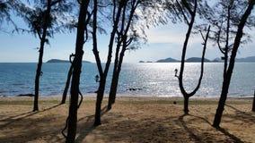 Playa con los árboles de pino en el día soleado Fotografía de archivo libre de regalías