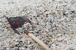 Playa con los shelles Fotos de archivo