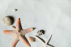Playa con muchas conchas marinas y estrellas de mar Imagen de archivo